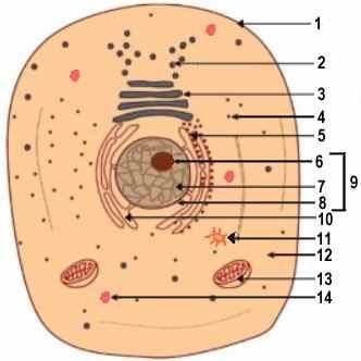 cell labeling worksheet